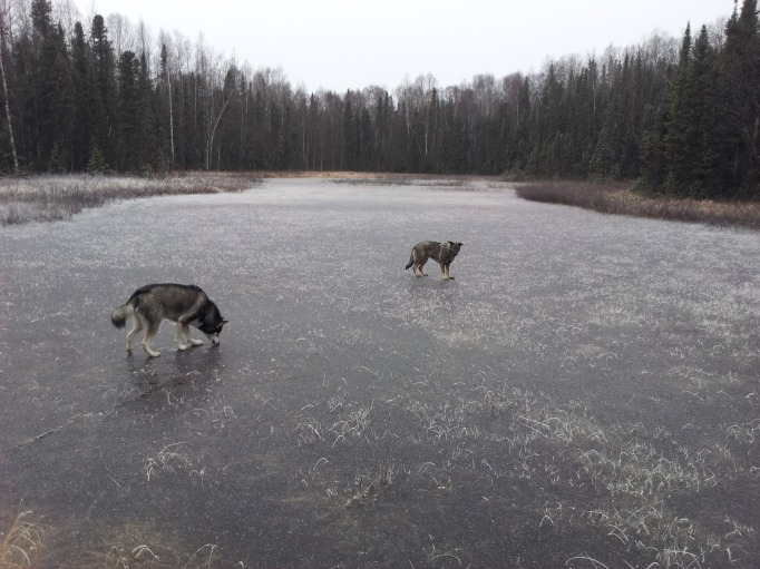 Anana and Qanuk on the close by frozen pond