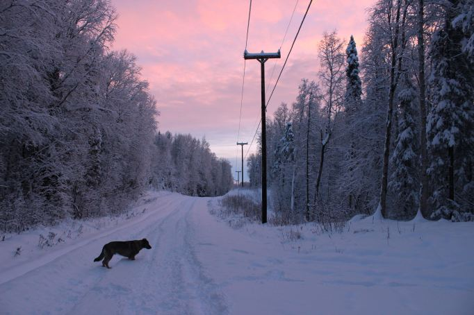 Qanuk On East Barge Drive In Pink Sunrise After Weekend's Snow