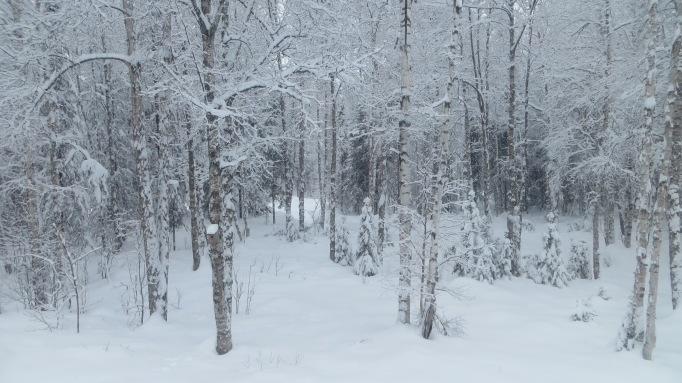 My back yard around 11:00 AKST on March 5, 2014