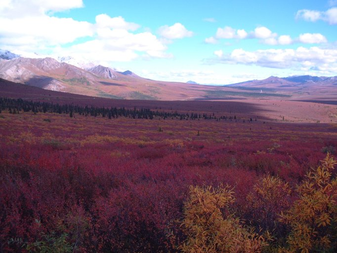 The valley area around Savage River Station in Denali NP&P seen in early September color