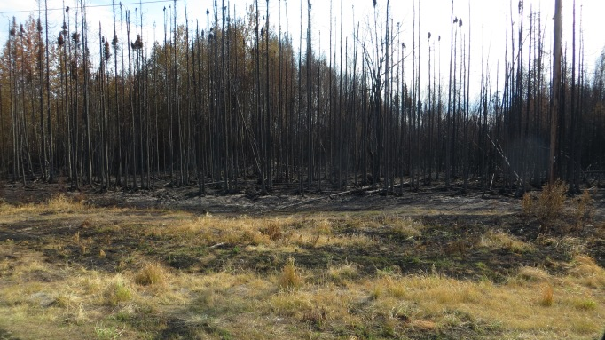Close up of burned Boreal Forest