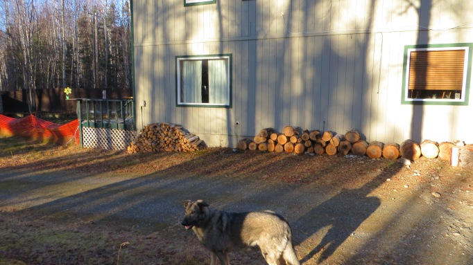 Long shadows, Qanuk and firewood