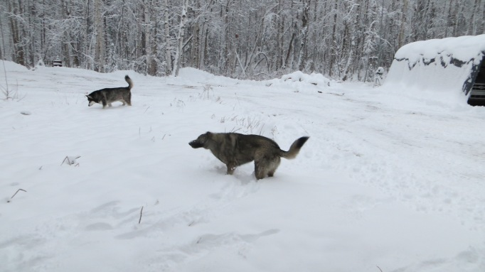 The 'kidz' enjoying the fresh snow!