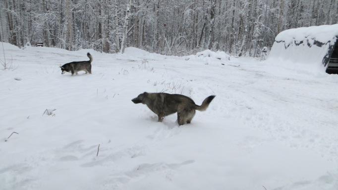 The 'kidz' enjoying the fresh snow!