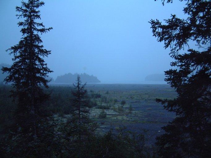 Timbers-Fog.jpg