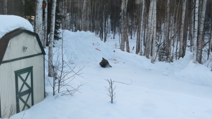 Driveway Moose WA 032318