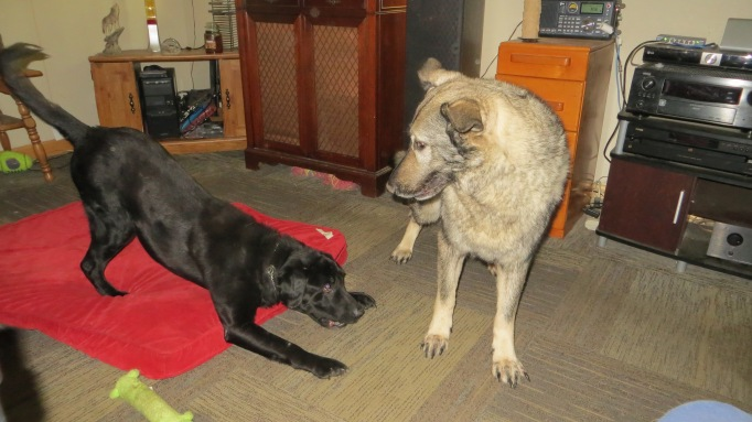 Shadow & Qanuk at Play